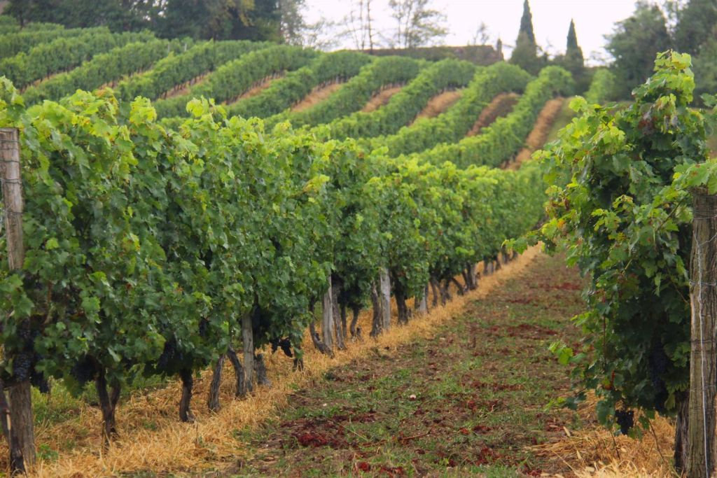 wine land for sale on Bergerac (24100) - See details
