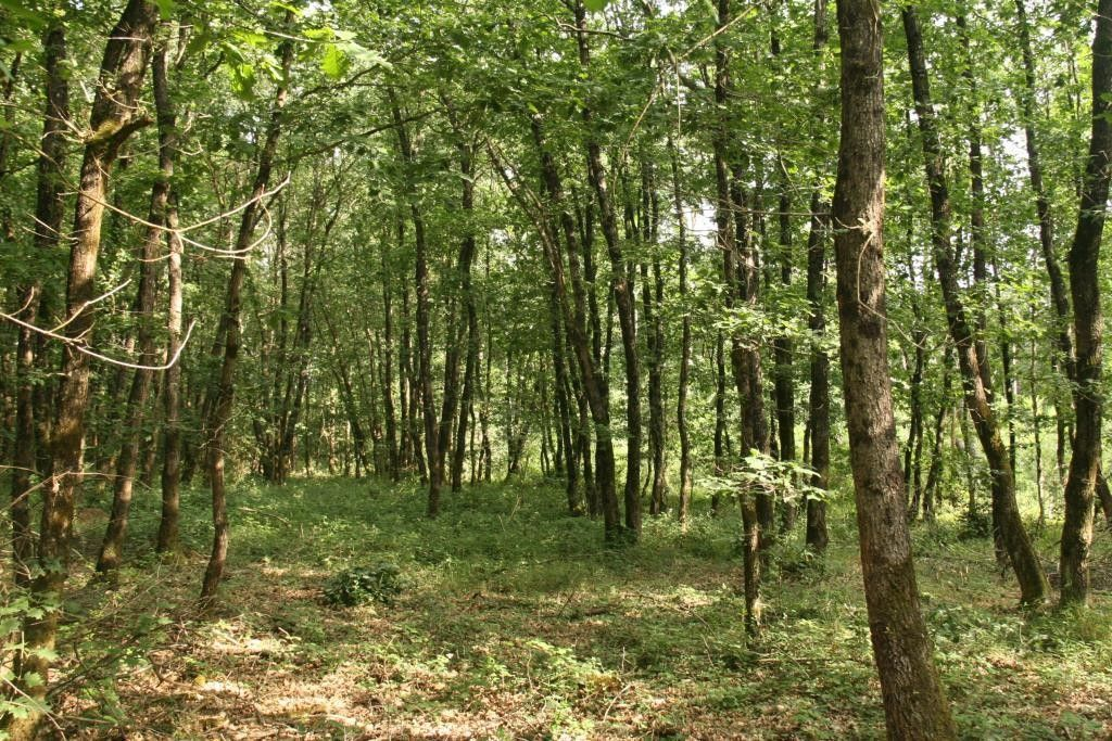 forest for sale on Chateaubriant (44110) - See details